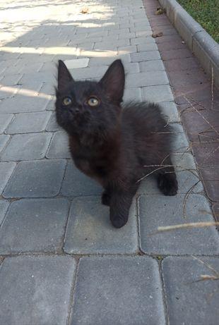 Подарю замечательного котёнка