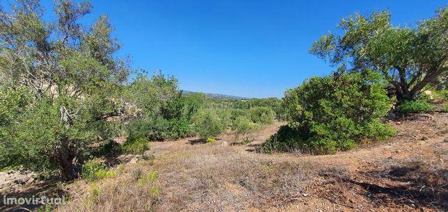 Terreno rústico no Algarve