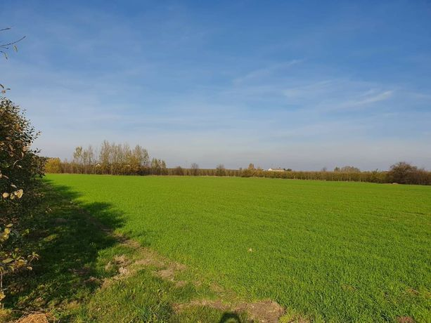 Działka rolna w dobrej lokalizacji