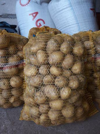 Ziemniak Denar  sadzeniak
