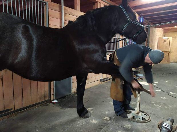 услуги по ковке и расчистке лошадей