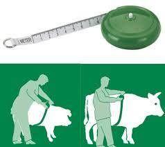 Miara taśma zoometryczna do wyznaczania wagi bydła i trzody