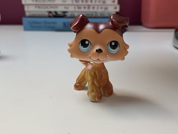 Lps collie #58/2