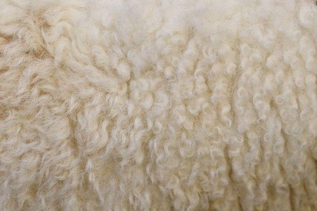 Продам белоснежную овчиную шерсть