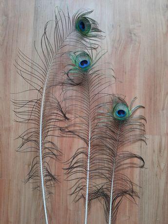 Pawie pióra 3 sztuki