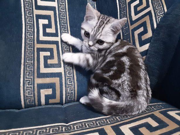 Котики и кошечки мраморята