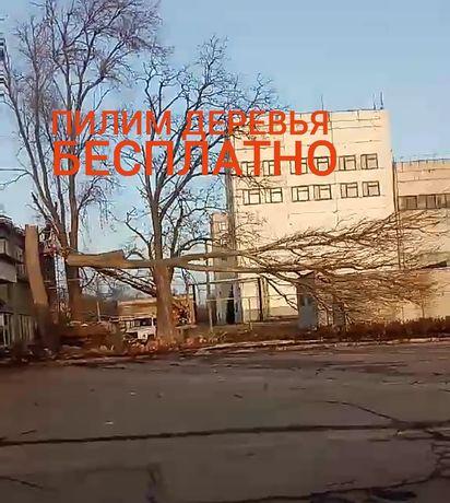 Спил, удаление деревьев, уборка территории, разнорабочие, вывоз мусора