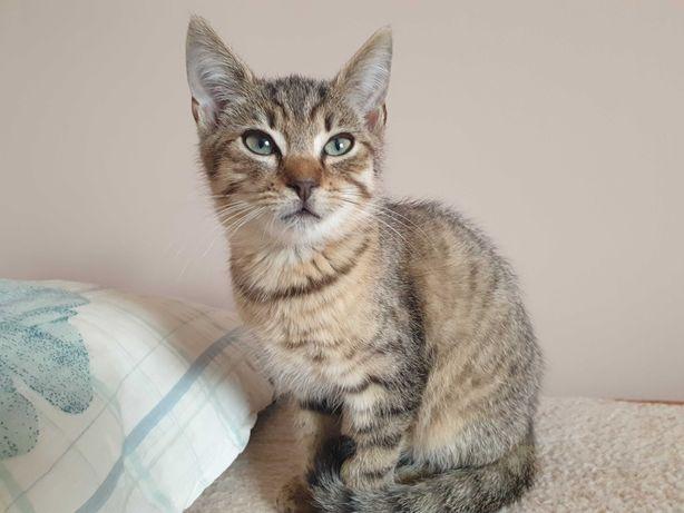 Oddam małego kotka (chłopiec) w dobre ręce kot