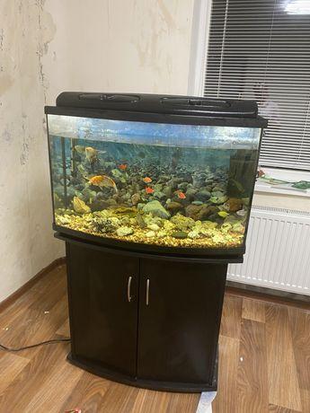 Аквариум с тумбой и рыбками