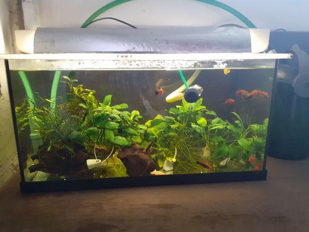 Akwarium 54l wymiary 60×30÷30