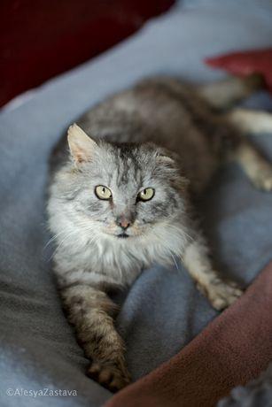 Очаровательный воспитанный безухий кот кастрирован