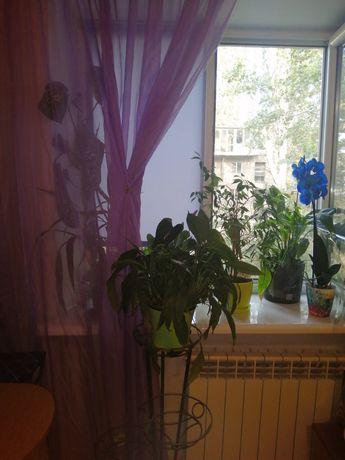 Срочно Продам комнату в коммунальной квартире  без комиссии