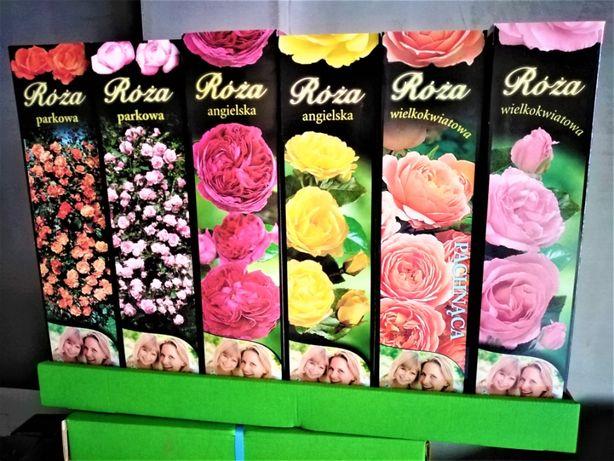 Róże krzewy róż, sadzonki.balot.kartonik.