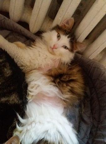 Rudzielec i długowłosy - dwupak do adopcji