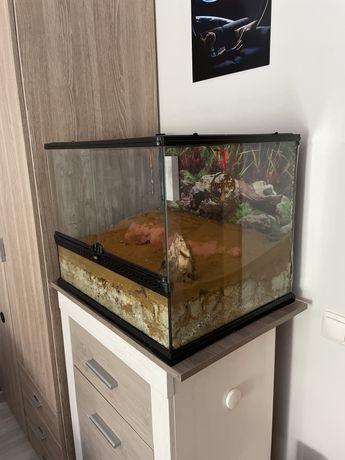 Terrario para geckos com purificador de ar