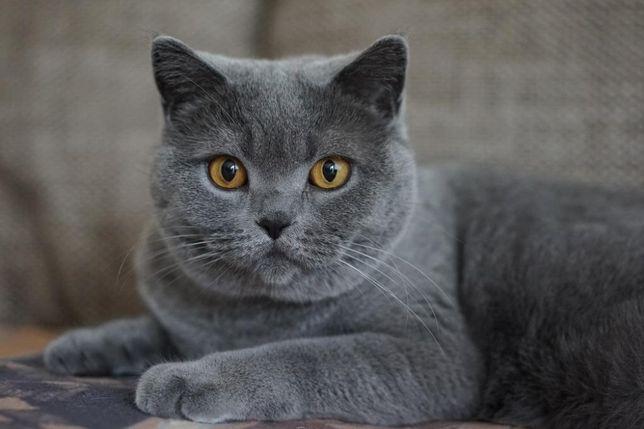 Котик Семочка