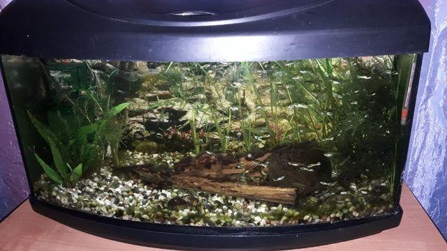 Akwarium 54l. profilowane