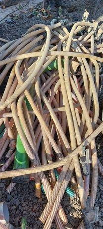 Przewody nasienne Amazone AD-P Cirrus