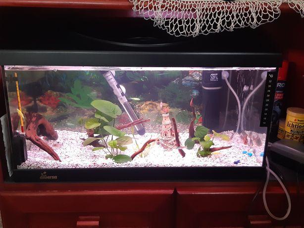 Akwarium 60 l wraz z zestawem