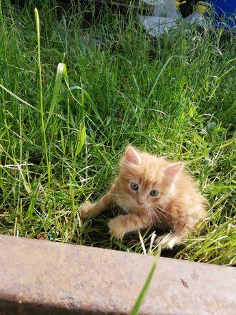 Дарим пушистых котят