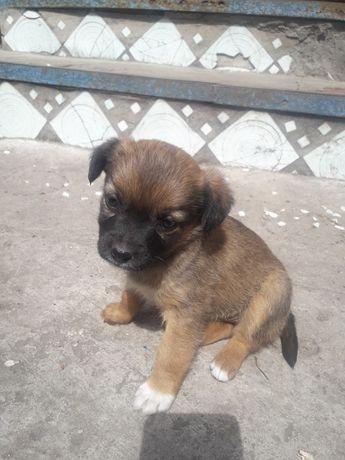 Собачка  маленькая