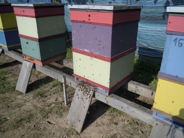 Pszczoły:Sprzedam: rodziny pszczele