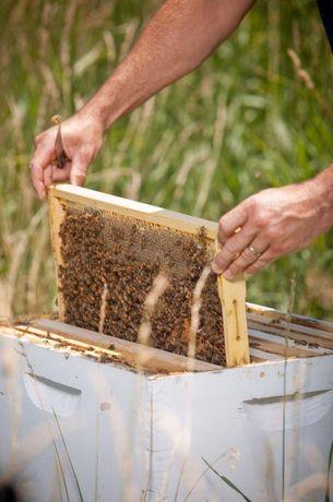 Бджолині матки Обвал цен! Карника Скленар, Тройзек
