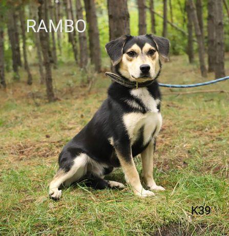Rambo przyjazny pies szuka domu