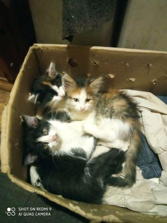Маленькие котята хотим отдать в хорошие руки