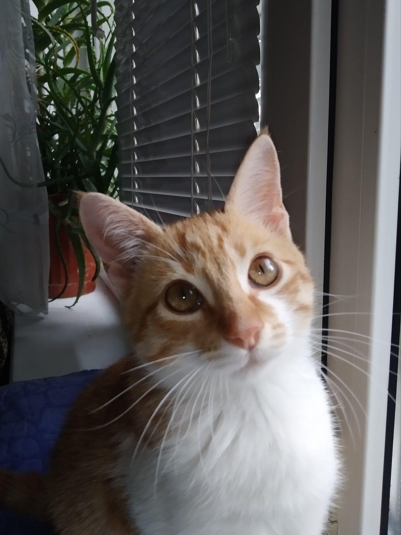 Милий рижий котик шукає сім'ю