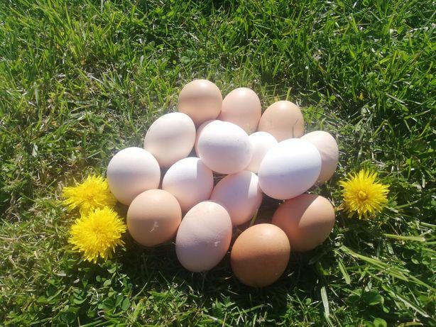 Swojskie jajka jaja i miód
