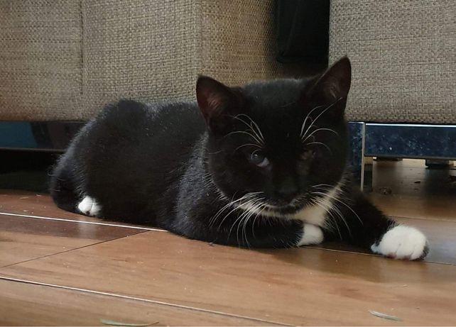 Tulaśny kot po przejsciach szuka domu