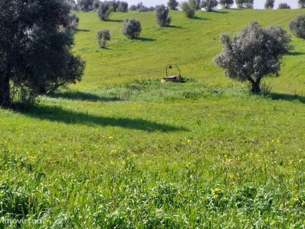 Monte da Abegoaria - F. do Alentejo com 4,8 Hectares área de regadio