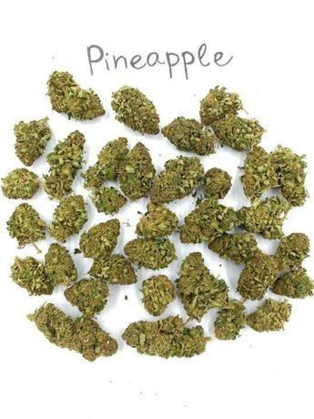 Susz CBD konopny Pineapple 50g