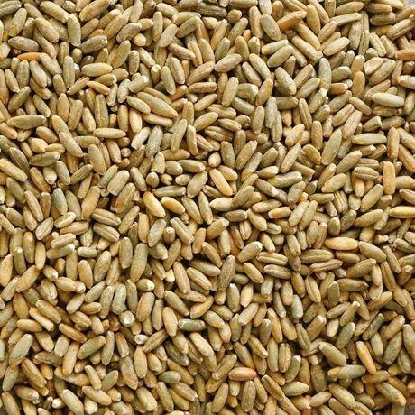 Żyto owies jęczmień pszenżyto  25 ton 2021