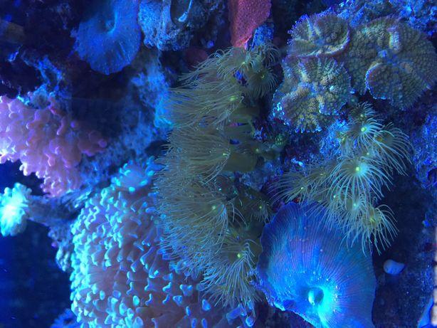 морской аквариум , кораллы, живность