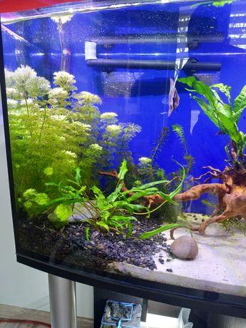 Roślinka do akwarium