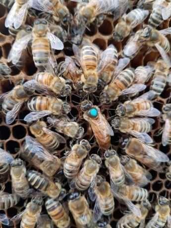 пчелиный подмор 2021