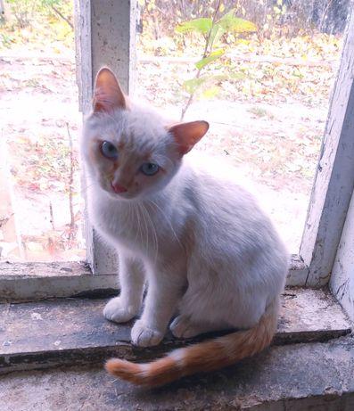 Красавец котенок Барс ищет ответственных хозяев.