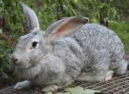 Корм для кролей откорм от 6 недель