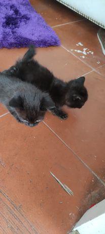 Gatos para adocao