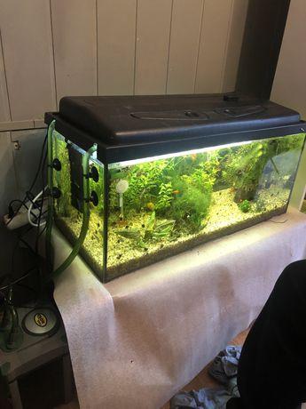 Akwarium roslonkin zwirek i grzalka 80x35x35 100litrow