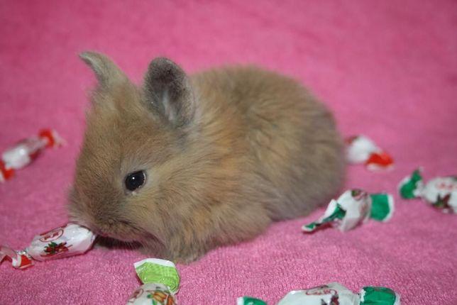 Мини крольчата для любимых