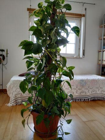 Planta natural com vaso