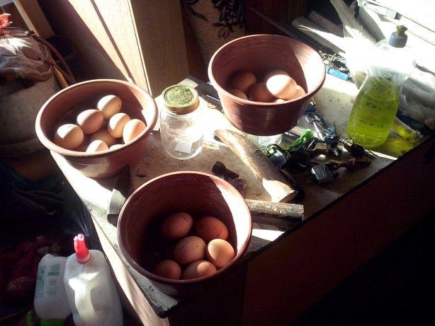 jajka świeże zdrowe naturalne,