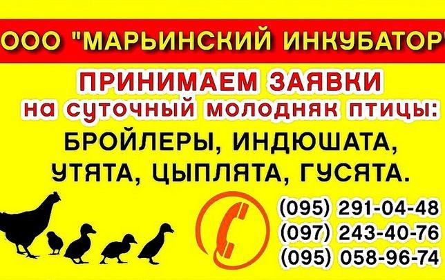 ООО Марьянский инкубатор