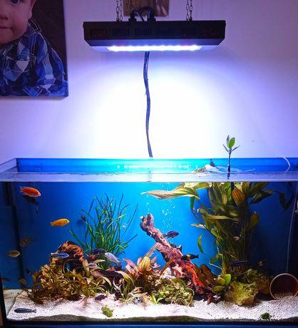 Akwarium z Panelem