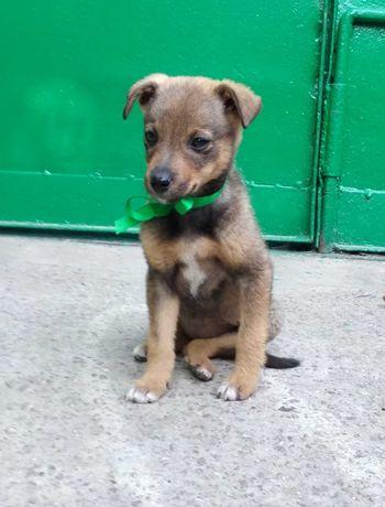Щенок, маленькая собака в добрые руки