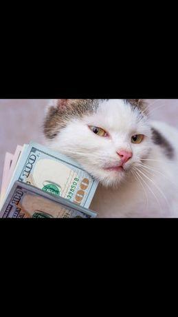 Частный займ кредит без предопдат в течении часа от инвестора