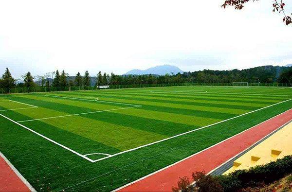 Семена газонных трав Спортивный газон 1 кг